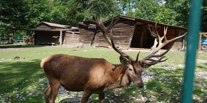Der Wildpark im August / Video